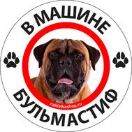 Наклейка В машине бульмастиф, фото 1