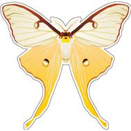 Наклейка Бабочка бело-оранжевая, фото 1
