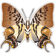 Наклейка Бабочка, фото 1