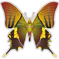 Наклейка Бабочка оранжево-зеленая, фото 1