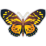 Наклейка Бабочка оранжево-черная, фото 1