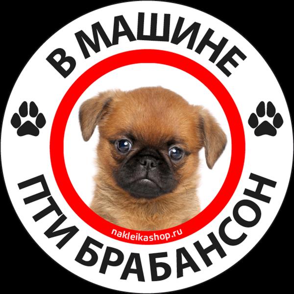 Наклейка В машине пти брабансон, фото 1