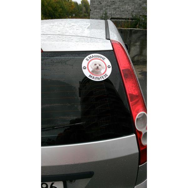 Наклейка В машине мальтезе, фото 2